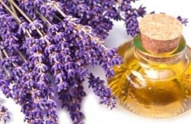 5 Manfaat Minyak Lavender Bagi Kesehatan