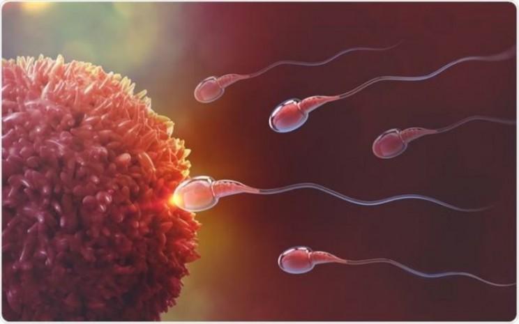 Kehamilan sangat bergantung dengan kemampuan bergerak sperma dan kesehatan indung telur. - ilustrasi