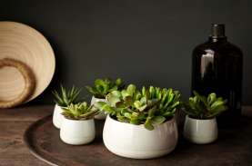 Tips Simple Menata Tanaman Hias di Rumah