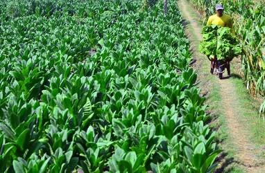 Pertanian Unjuk Gigi Lagi