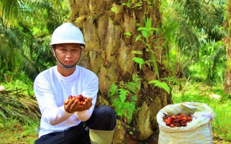 Ilustrasi PT FAP Agri, emiten perkebunan kelapa sawit.  - FAP Agri