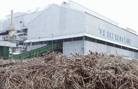 Pabrik Gula Sei Semayang Kembali Beroperasi Setelah Berhenti Enam Tahun