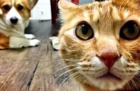 Kasihan, Seekor Kucing di Korsel Positif Covid-19. Ini Gejalanya