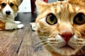 Kasihan, Seekor Kucing di Korsel Positif Covid-19.…
