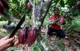 Kaltim Segera Realisasikan Kawasan Pertanian Terintegrasi Berbasis Korporasi Petani