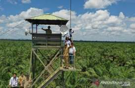 Perusahaan Perkebunan di Kalbar Diimbau agar Waspadai Karhutla
