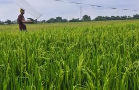 Jadi Penyelamat Ekonomi RI, Ternyata Sektor Pertanian Punya Banyak Masalah