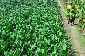Jika Pandemi Terkendali, Pertanian Maksimal Hanya…