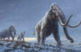 DNA Tertua di Dunia Diurutkan dari Mammoth Berusia Lebih dari 1 Juta Tahun