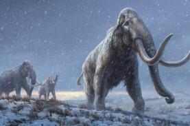 DNA Tertua di Dunia Diurutkan dari Mammoth Berusia…