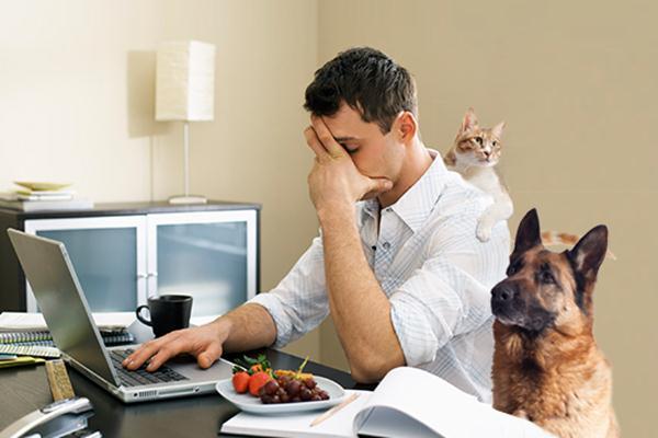 Bekerja di rumah (WFH) bisa memicu stres - Rantchic
