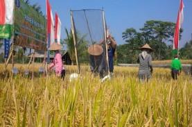 Sektor Pertanian Mampu Menopang Ekonomi Bali