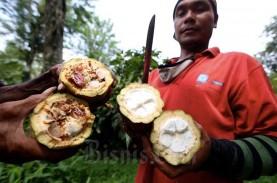 Ini Perbedaan Harga Biji Kakao Indonesia Sebelum dan…