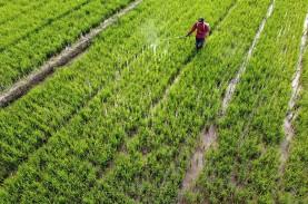 Indonesia Tak Perlu Impor Beras meski Curah Hujan…