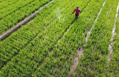 Indonesia Tak Perlu Impor Beras meski Curah Hujan Tinggi, Kenapa?