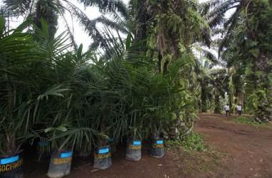 Tahun Ini Riau Dapat Kuota 26.500 Ha Program Replanting Sawit