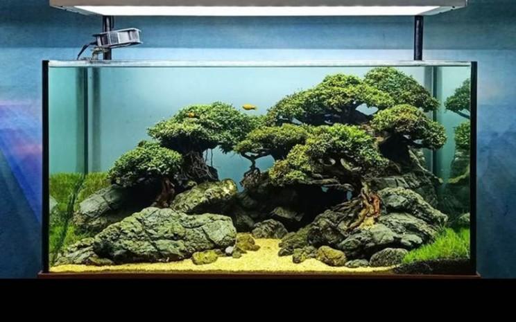 Aquascape - ilustrasi