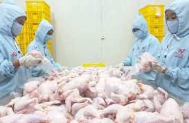 Rampungkan Rumah Potong Ayam, Widodo Makmur Unggas (WMUU) Optimistis Segera Melejit