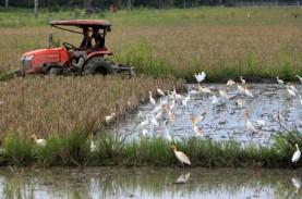 Puluhan Burung di Bantul Mati Misterius, Berjatuhan…