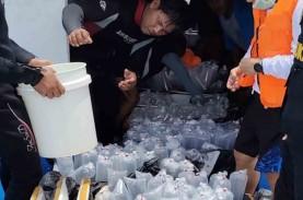 53.129 Ekor Benih Lobster Dilepasliarkan di Padang