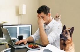 Tips Untuk Tetap Fokus Ketika Bekerja dari Rumah