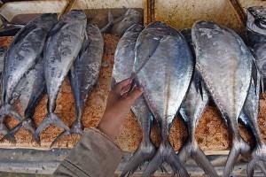 Konsumsi Ikan Nasional Naik 3,47 Persen Pada 2020