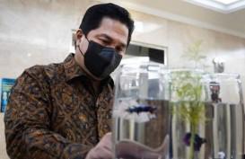 Menteri BUMN Erick Thohir Mulai Pelihara Ikan Cupang?