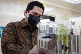 Menteri BUMN Erick Thohir Mulai Pelihara Ikan Cupang?…