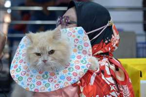 Wujudkan Kota Ramah Kucing, Kota Banda Aceh Gelar Kontes Kucing