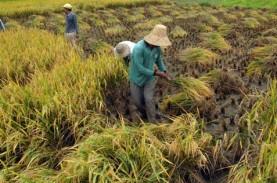 Riau Siapkan 30.000 Hektare Lahan untuk Program Ketahanan…