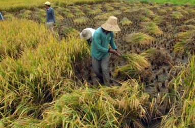 Riau Siapkan 30.000 Hektare Lahan untuk Program Ketahanan Pangan