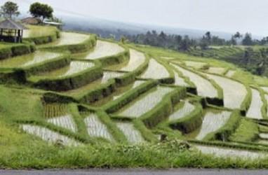 Produksi Beras di Bali Merosot Gara-Gara Penurunan Luas Panen