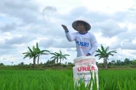 Produksi Padi Sumsel Berpotensi Disalip Lampung
