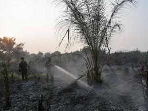 Provinsi Riau Tetapkan Status Siaga Darurat Kebakaran Hutan dan Lahan
