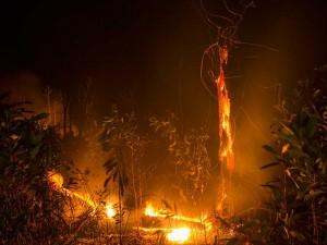 Hutan Lindung PT Chevron Pacific Indonesia di Riau Terbakar
