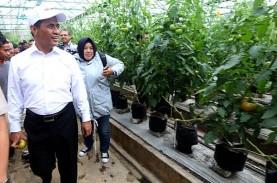 UMKM Agrikultur : 74 Persen Bantuan Tunai Digunakan…