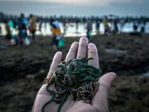 Tradisi Mencari Cacing Laut Warna Warni di Lombok