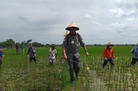 Boyolali Bisa Jadi Lokomotif Peningkatan Pertanian,…