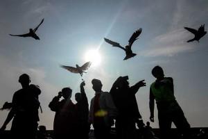 Latihan Terbang Burung Paruh Bengkok di Depok Jawa Barat