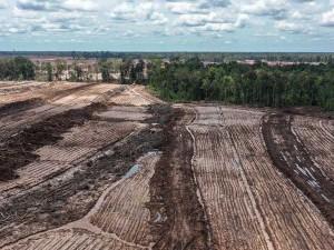Kementerian Pertanian Alokasikan Anggaran Senilai Rp1,422 triliun Untuk Kembangkan Food Estate di Kalteng