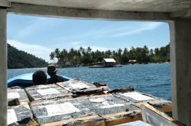 Petugas di Bandara Juanda Temukan 29.250 Benih Lobster