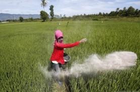 Realisasi Produksi Padi Sumatra Barat 2020 Menurun