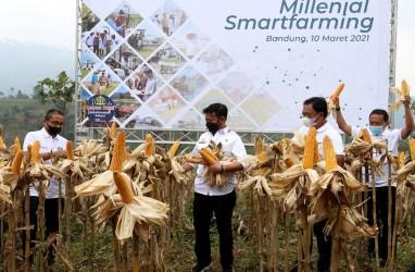 Millenial Smartfarming, Upaya BNI Digitilisasi Pertanian Bersama Pemuda