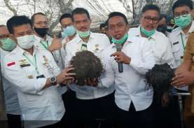 Ekspor Tepung Porang, Setiap Tahun Bali Diminta Kirim…