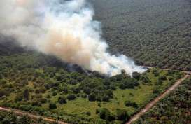 Jelang Musim Kemarau, Gapki Perkuat Pencegahan Kebakaran Hutan