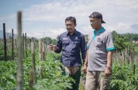 Genjot Produktivitas Petani, Pupuk Kujang Terjunkan Tim Riset untuk Pendampingan