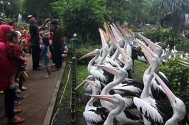 Taman Margasatwa Ragunan Dibuka Lagi, ini Syarat Berkunjung