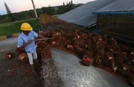 Lagi, Sawit Riau Naik ke Harga Rp2.384,26 per Kg