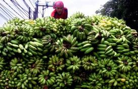 Lampung Genjot Produksi Buah-buahan, Sasar Pasar Ekspor
