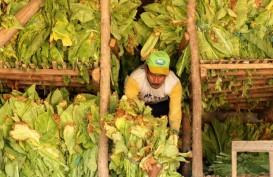Petani Tembakau Boyolali Terima Bantuan Hasil Cukai